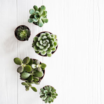 Relationship counselling Brighton